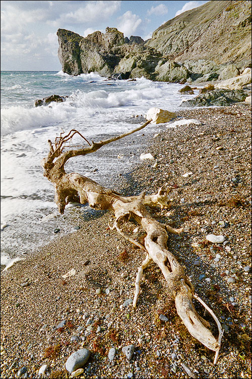 Живет ли на Карадаге морской змей?